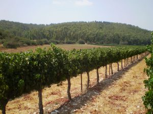 wine-tour-of-israel