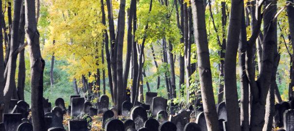 Okopowa Jewish Cemetery. Warsaw