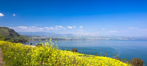 Yelloy flowers near sea of Galilee in sunny spring day. Beautiful Israel nature.