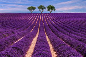 Jewish Tour to France, 9 days/8 nights. Lavender field