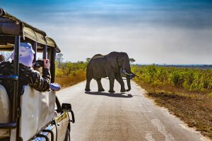 African Elephants, Kosher Tour to South Africa