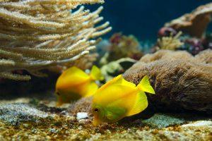 Jewish Heritage Tour to Israel with Eilat, 12 nights. Eilat Underwater Observatory