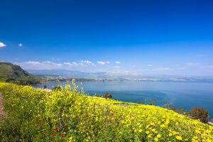 Yellow flowers near sea of Galilee in Israel, Fall Accessible Multicultural Tour