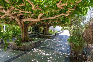 Jardín de la Iglesia Ortodoxa Griega de los Santos Apóstoles, cerca de la orilla del mar de Galilea en Israel, Circuito Tierra Santa (Llegada - Domingos)